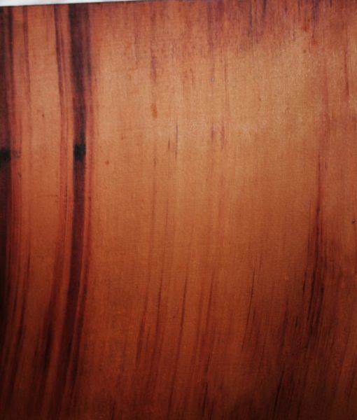 giant sequoia-redwood