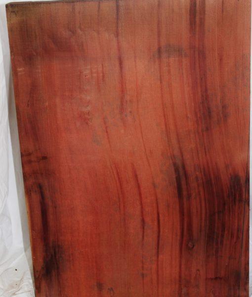 Giant Sequoia Redwood
